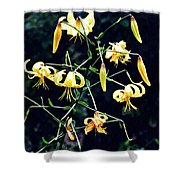 Yellow Lilies In Fort Tryon Park Shower Curtain