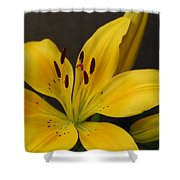 Yellow Lily 1 Shower Curtain
