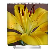 Yellow Lily 2 Shower Curtain