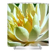 Yellow Lily Burst Shower Curtain