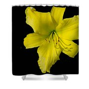 Yellow Lily Flower Black Background Shower Curtain