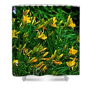 Yellow Lily Flowers Shower Curtain