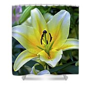 Yellow Lily Longwood Gardens Shower Curtain
