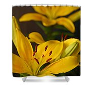 Yellow Lily Mirror Shower Curtain