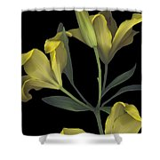 Yellow Lily On Black Shower Curtain