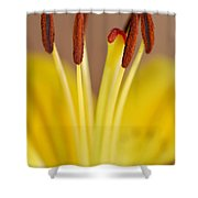 Yellow Lily Reach 1 Shower Curtain