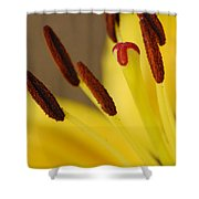 Yellow Lily Reach 2 Shower Curtain