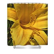 Yellow Lily Shines Brightly  Shower Curtain