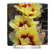 Yellow Long- Spined Prickly Pear Cactus  Shower Curtain