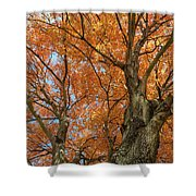 Yellow Maple Tree Shower Curtain