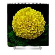 Yellow Marigold Flower On Black Background Shower Curtain