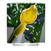Yellow Mini Calla Lilies Shower Curtain