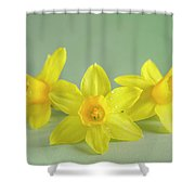 Yellow Mini Narcissus On Green 2 Shower Curtain