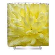 Yellow Mum Shower Curtain