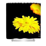 Yellow Mum On Black Backround Shower Curtain