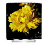 Yellow Mum With Raindrops Shower Curtain