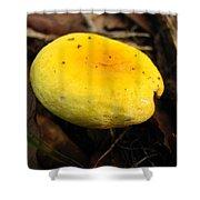 Yellow Mushroom Cap Shower Curtain