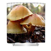 Yellow Mushrooms 1 Shower Curtain