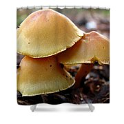 Yellow Mushrooms 2 Shower Curtain