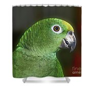 Yellow Naped Amazon Parrot Shower Curtain