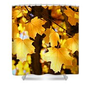 Yellow Nature Tree Leaves Art Prints Bright Baslee Troutman Shower Curtain