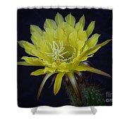 Yellow Night Blooming Cactus  Shower Curtain