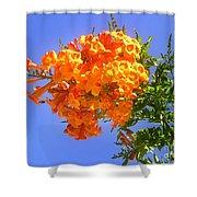 Yellow-orange Horn Flowers 01 Shower Curtain