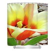 Yellow Orange Tulip Flower Art Print Baslee Troutman Shower Curtain