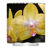 Yellow Orchid 2 Shower Curtain