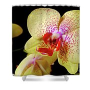 Yellow Phalaenopsis Orchid Shower Curtain