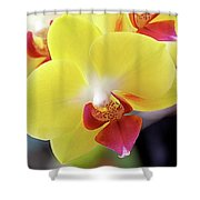 Yellow Phalaenopsis Orchids Shower Curtain