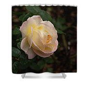 Yellow/pink Rose Shower Curtain