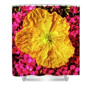 Yellow Poppy And Kalanchoe Flowers Shower Curtain