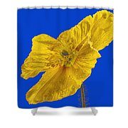 Yellow Poppy On Blue Background Shower Curtain