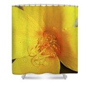 Yellow Poppy With Rain Shower Curtain