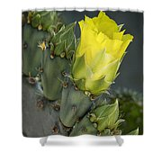 Yellow Prickly Pear Cactus Bloom Shower Curtain