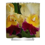 Yellow Purple Orchids Shower Curtain