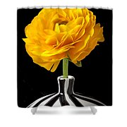 Yellow Ranunculus In Striped Vase Shower Curtain