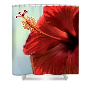 Yellow Red And Coral Hibiscus Profile Shower Curtain