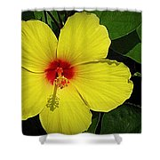 Yellow Red Hibiscus Shower Curtain
