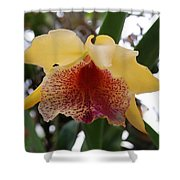 Yellow Red Orchid Shower Curtain