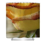 Yellow - Red Rose Shower Curtain