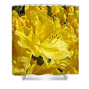 Yellow Rhodies Floral Brilliant Sunny Rhododendrons Baslee Troutman Shower Curtain