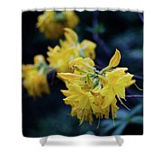 Yellow Rhododendron Flower Shower Curtain