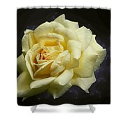Yellow Rose 2 Shower Curtain