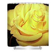 Yellow Rose For Friendship Shower Curtain