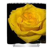Yellow Rose  - Friendship,joy,good Health Shower Curtain