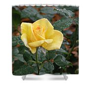 Yellow Rose In The Rain Shower Curtain