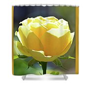 Yellow Rose In The Sun Shower Curtain