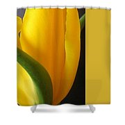 Yellow Rose Art Shower Curtain